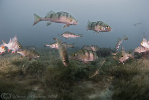 Perch. Capernwray. D200, 10.5mm. by Derek Haslam 